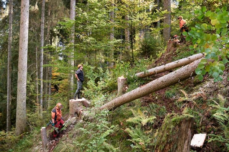 Ein Wald mit Waldarbeitern und umgesägten Bäumen